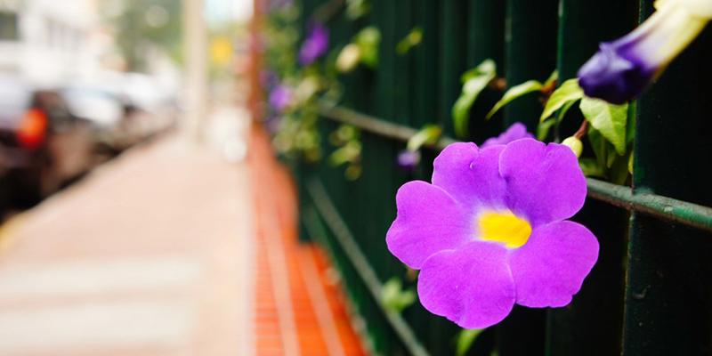 7 советов для фотосъёмки в повседневной жизни