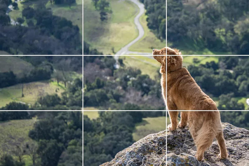 Первое Правило Фотоклуба: «Правило Третей»
