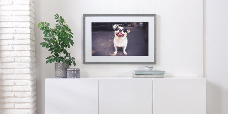 Как запечатлеть вашего питомца с помощью фотографии